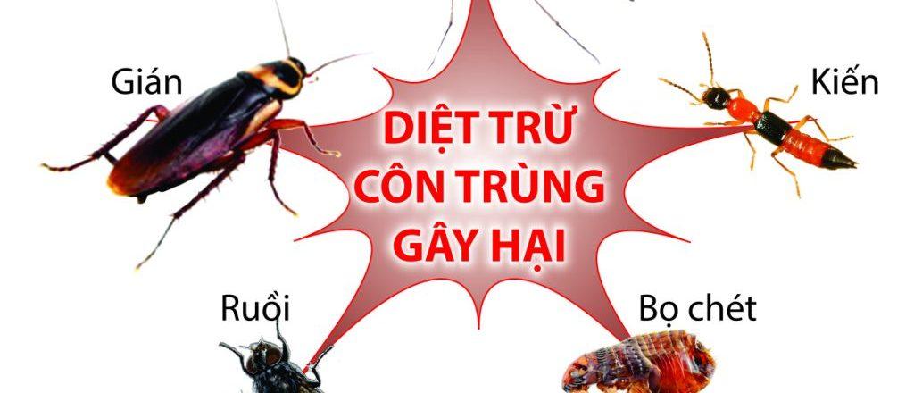 Diệt côn trùng gây hại