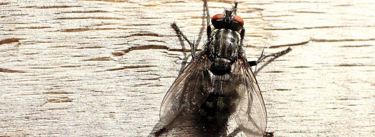 Dịch vụ diệt ruồi tận gốc